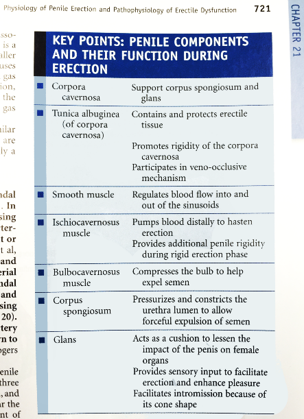Campbell-Walsh Urology, p721 - penile components and their function during erection; no mention of foreskin